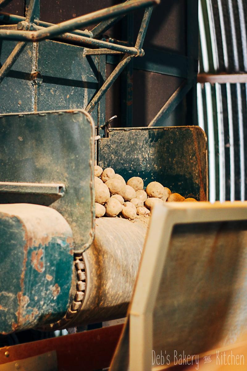 Boerderij Chips- vers van het land